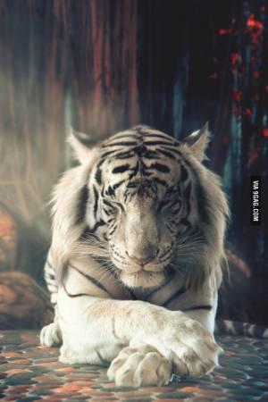 Dark_Tiger641