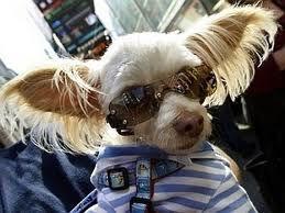 cool kuza
