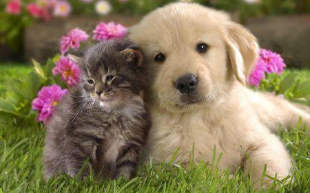 muca in kužek