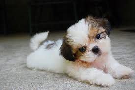 a ni cute kužek??