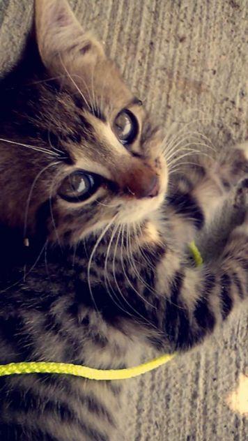 Cute (moja muci Luna)