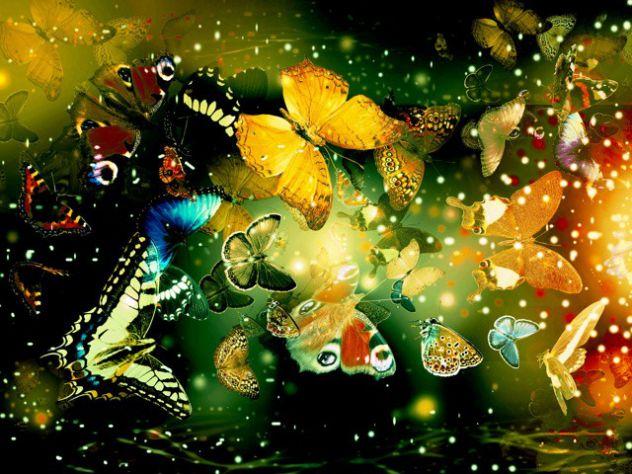 metuljčki