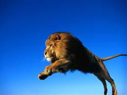 lev leti