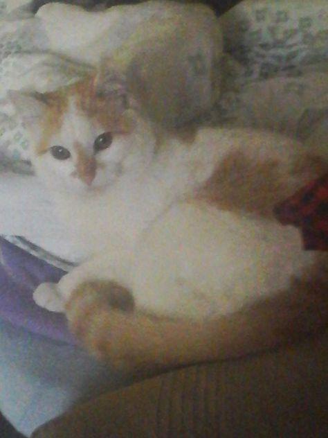 moj mac Romeo