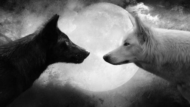 Obožujem volke in konje