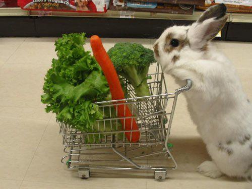 zajček gre v shop