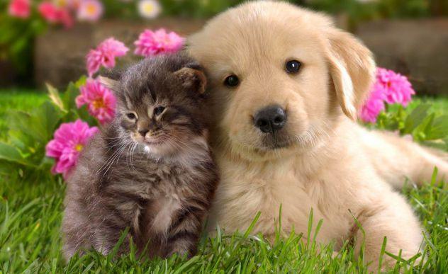 cat& dog