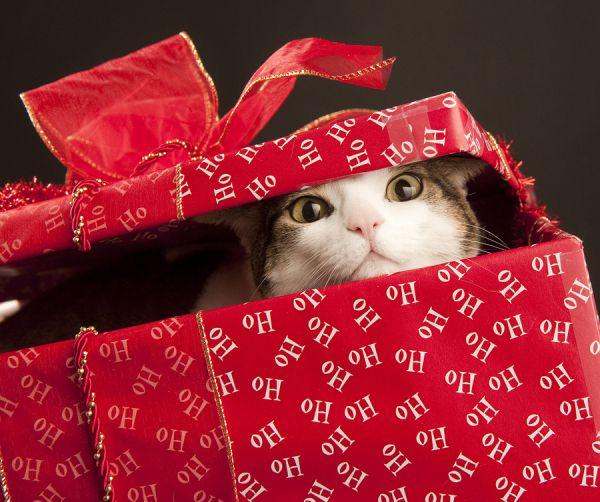 muahahahha ukradla sem ti darilo!!!!