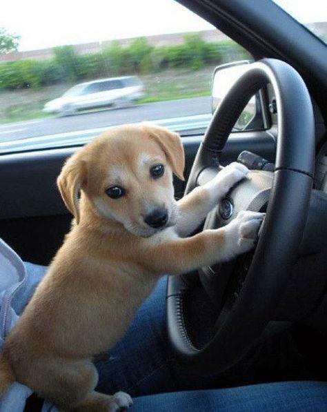 Lahko vozim!?