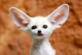 velika ušeska
