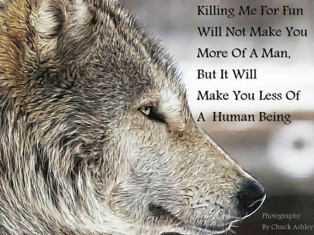 Wolves kill to survive.People kill for money.