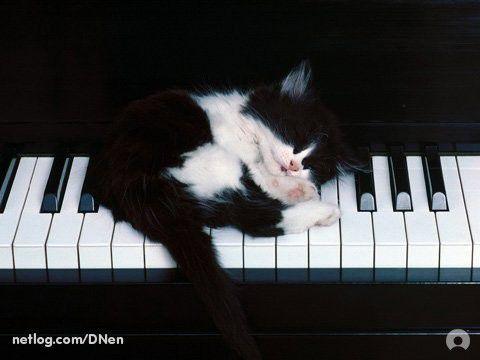 Mucek na klavirju