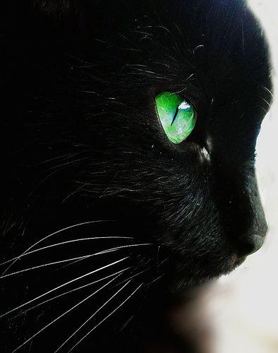 črna muca