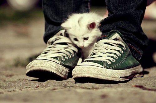 cat & all star