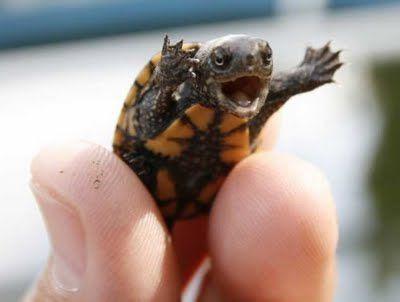 Turtle Attack!!! *-*