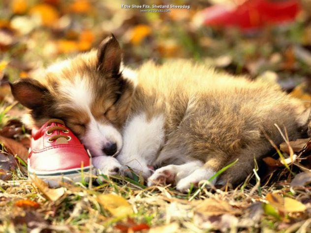 Shoe and dog