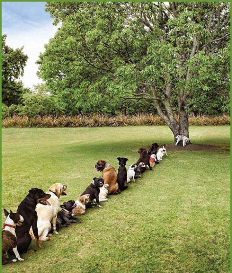 zalivalna akcija: zalimo drevesa  v enem dnevu