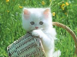 Kitty.< 3