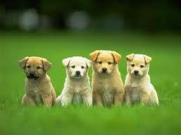 Dogs.n____n