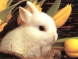 Bunny.< 3