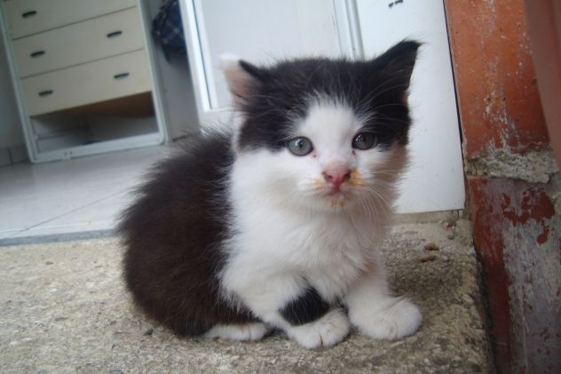 Naš mačk :3 Ni ga več kakih 2 leti -_- ;(
