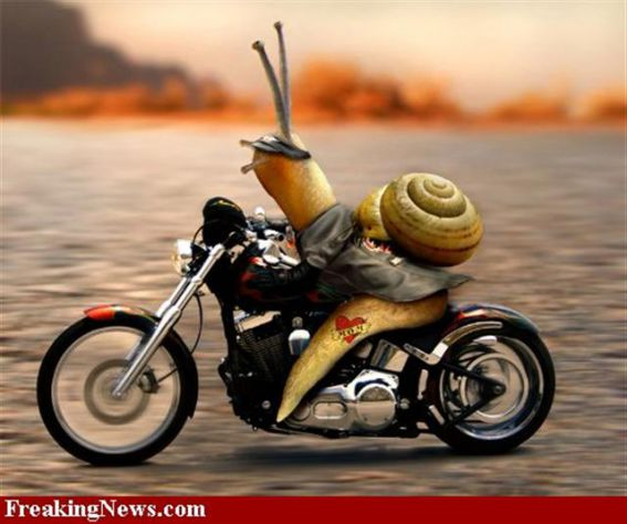 polžji motorist