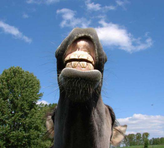 a mam lepe zobe?