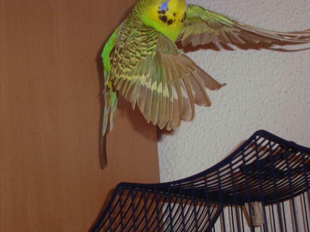 moj ptiček v letu...sam mau sem grešla