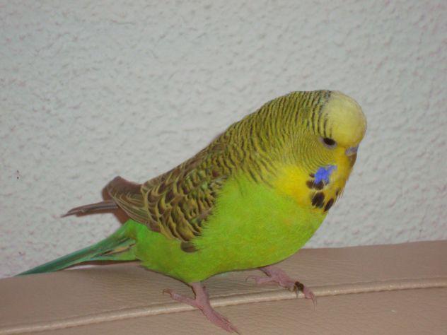 roki moj ptiček :)