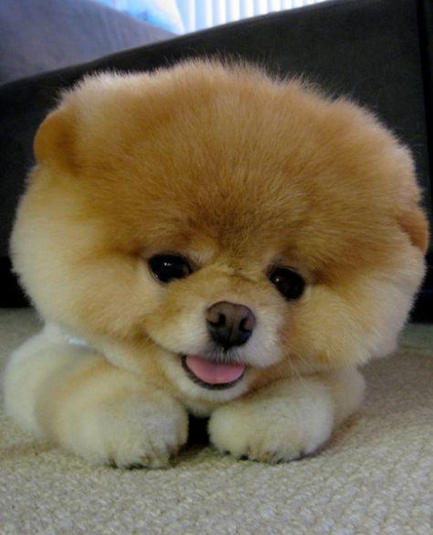 a ni cute???