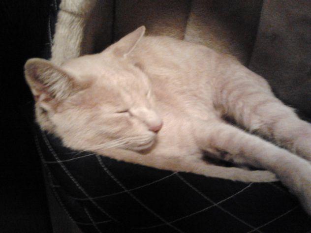 moj maček miki