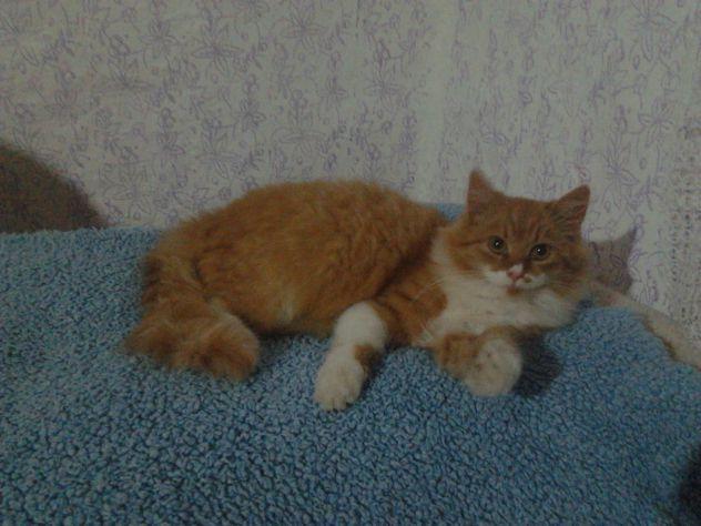 moj drugi maček piki miki