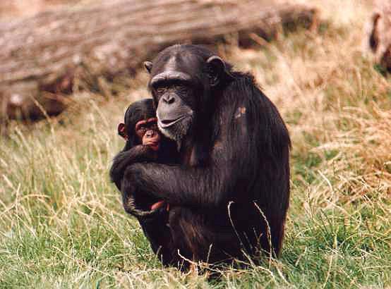luškane opice