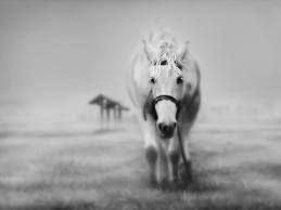 Osamljen konj