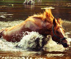 Konj v vodi