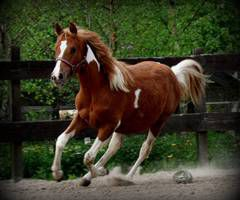 Teksaški konj