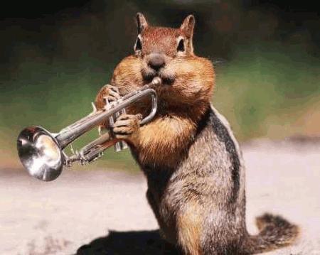 veverica z trobento