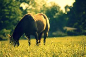 .Horse.*