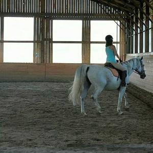 .horsegirl.