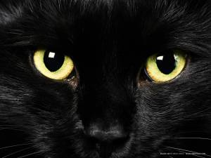 blacky cat