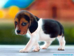 cute :)puppy