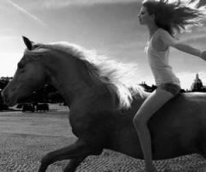 eva loveshorses