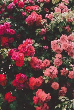 FlowerPower <3