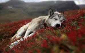 goldenwolf2001