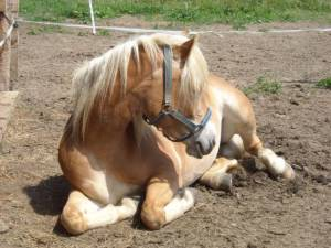 horse junkie<3