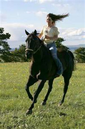 horses FLICKA