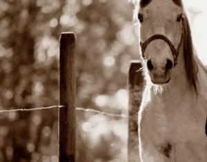 Horses is life