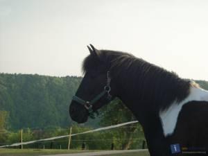 horsesgirl