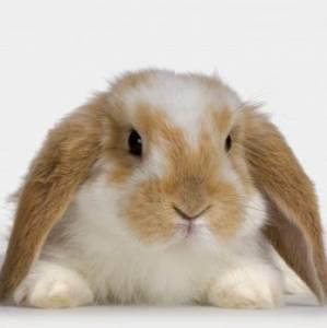 i love rabbit