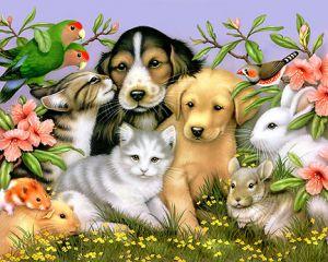 Love&Pets